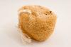 Foto de Esponja vegetal luff en rodaja